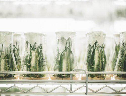 Nano-nutracéuticos vegetales con actividad antitumoral frente al cáncer de colon